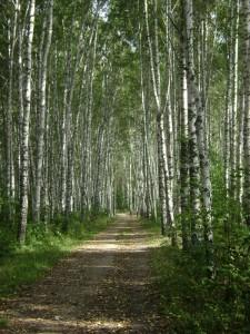 лесной путь