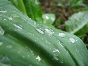 тайга после дождя