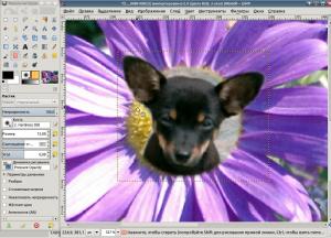 скриншот - щенок