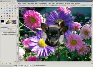 обработка фото (щенок)
