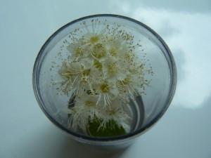 цветочки в стопке