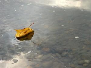 листок на воде